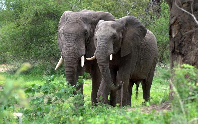 Aberdare Safari