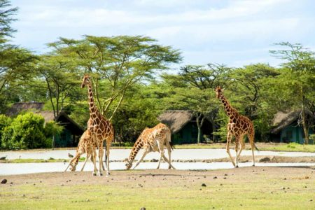 Nanyuki Getaway at Falcon Heights, Ol Pejeta or Sweet Waters Serena Camp