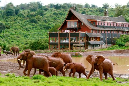 5 Day Lake Nakuru, Masai Mara & Aberdares Road Safari
