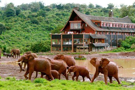 5 Day Lake Nakuru, Masai Mara & Aberdares Road Safari