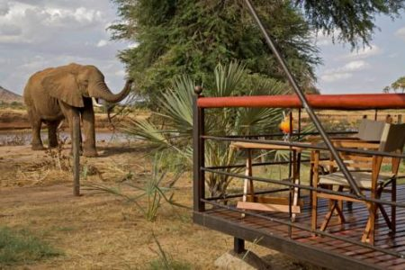 5 Day Masai Mara & Samburu Flying Safari