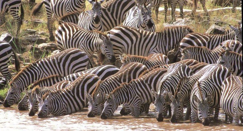 African Safari Masai Mara