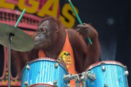 Orangutan Boxing Show Bangkok