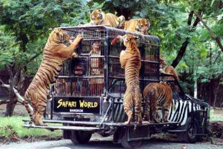Safari World Zoo Bangkok