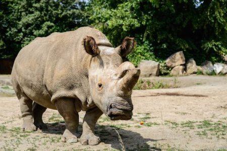 Sudan Ol-Pejeta Safari