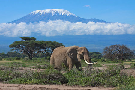 2 Night Road Safari to Amboseli National Park (Resident)