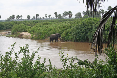 River Rufiji Elephant