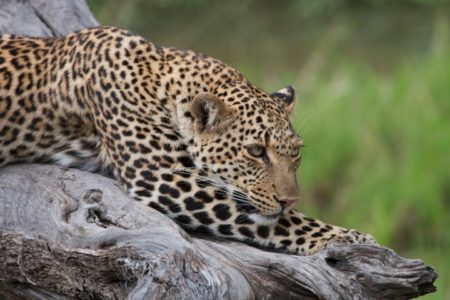 4 Day Masai Mara Luxury Safari (Flying Package)