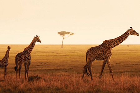 4 Day Serengeti Luxury Safari (Flying Package)