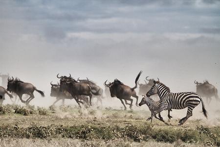 Serengeti Luxury Safari
