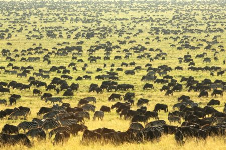 8 Day Tanzania Northern Circuit Luxury Safari