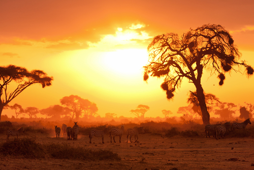 Tembea Kenya Packages: Customize Your Trip to Over 10 Destinations