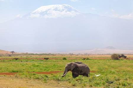 3 Day Amboseli Flying Safari