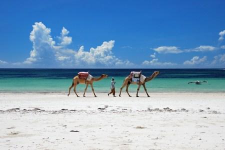 Mombasa Mara